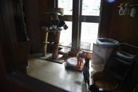猫神様はサービス精神旺盛その29リビングデビューその2 - りきの毎日