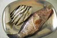 今日のランチは煮魚なり。 - 野だてnote