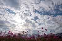 束の間の休日 - お庭のおと