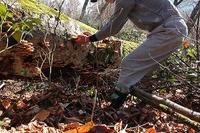今日のきのこ味番付➡ブナ林きのこ - きのこ・花・イワナ遊悠学