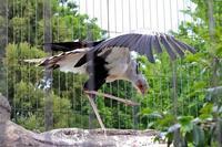 東武動物公園~ヘビクイワシとオオワシとワニ館 - 続々・動物園ありマス。