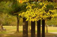 姫路城周辺にて(2018/10/14)其の⑥ - 南の気ままな写真日記