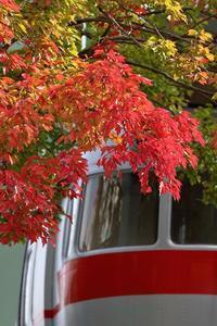 紅葉を探せ - miyabine's フォト日記2~身の周りのきれい・可愛い・面白い~
