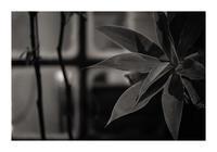 Leaf#40 - VELFIO
