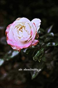 rose - A  B  C