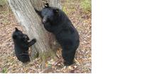 軽井沢でベアドッグ(クマ対策犬)~人とクマの共存を願って~ - 娘といっしょ