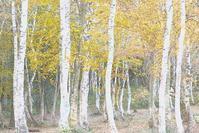 妙高高原 笹ヶ峰牧場の紅葉 2 - 光 塗人 の デジタル フォト グラフィック アート (DIGITAL PHOTOGRAPHIC ARTWORKS)