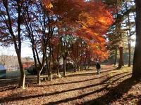 秋の夕陽に - 風路のこぶちさわ日記