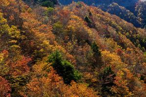雄大な山紅葉(大台ケ原ドライブウェイ) - 花景色-K.W.C. PhotoBlog