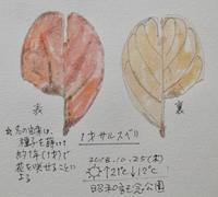 #ネイチャー・ジャーナル #Naturejournal 2018.10.25(木) 晴 気温↑21℃↓12 @昭和記念公園 - スケッチ感察ノート (Nature journal)