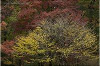 晩秋の色 - muku3のフォトスケッチ