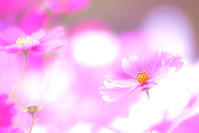 Le confort - Une fleur