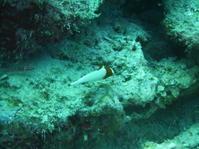珍しくマクロ狙い - 沖縄本島最南端・糸満の水中世界をご案内!「海の遊び処 なかゆくい」