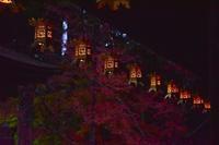 高野山の紅葉 - 峰さんの山あるき