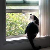 久々、パパ部屋の窓辺 - 猫と夕焼け