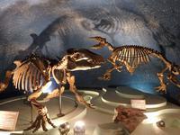 『岐阜県博物館の恐竜や化石と岩石等・・・・・』 - 自然風の自然風だより