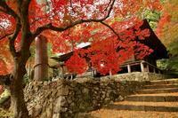 紅葉を求めてさすらいの旅へ - オーロラが消える前に...