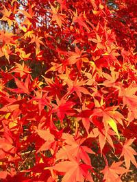 蓼科の紅葉が美しいです。 - piecing・針仕事と庭仕事の日々
