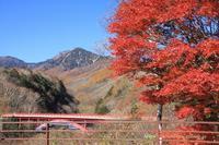 東沢大橋の紅葉 - 暮らしを紡ぐ