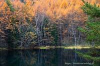 長野秋の御射鹿池へ - 暮らしを紡ぐ