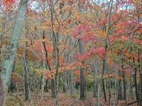 紅葉シーズンですね(*´ー`*) - Yufuin-Table ときどき Beppu-Table Blog