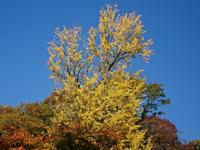群馬の山沿いが、赤や黄色に輝く季節ですね。 - NPO法人オ〜マイダーリンの活動記録