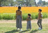 コスモス畑へ - nyaokoさんちの家族時間