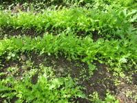 野菜畑と余生について・・・。 - 花の自由旋律