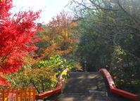 宇佐神宮は「すばらしい気」に満ちている。そして鱧カツもね♡ - poem  art. ***ココロの景色***