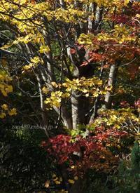 やっと秋が撮れた(^^♪ - 標高480mの窓からⅡ