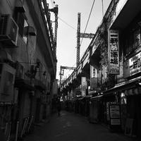 やって来た新入りちゃん! - 上野 アメ横 ウェスタン&レザーショップ 石原商店