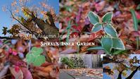 """Today's Inner Garden...11/9fri"" - SHOP ◆ The Spiralという館~カフェとインポート雑貨のある次世代型セレクトショップ~"