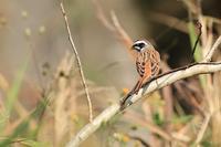 里山で出会った鳥さんたち♪ - happy-cafe*vol.2
