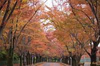 賀茂川雑木の紅葉・黄葉が綺麗2018年11月9日 - LLC徒然