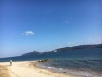 踊り子草 伊根の旅 - 京都西陣 小さな暮らし