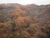八ヶ岳高原大橋の紅葉状況 - 八ヶ岳 革 ときどき くるみ