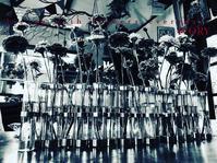 『HOSIIRO MARCHE』 -  Flower and cafe 花空間 ivory (アイボリー)