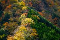 オクシズ散歩安倍峠へ - 長い木の橋