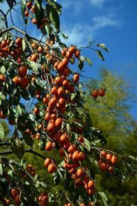 柿の秋 - 花・tuzuri