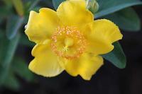 返り咲きの花と、カラタチの実、東御苑をもう少し - 子猫の迷い道Ⅱ