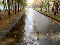 雨のウオーキング2 - 満たされぬ思い、日々の出来事