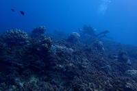 18.11.10浮原周辺で3ボートダイブ - 沖縄本島 島んちゅガイドの『ダイビング日誌』