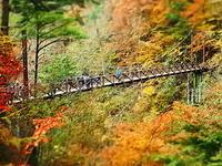秋の吊り橋 - 風の香に誘われて 風景のふぉと缶
