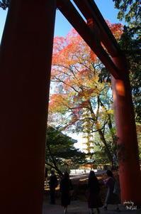 奈良市奈良公園スナップ:05 - ぶらり記録:2 奈良・大阪・・・