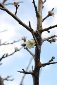 暴れる秋? - 千葉県いすみ環境と文化のさとセンター