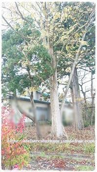 庭の大木伐採!! - 十色記