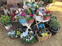 ロハスフェスタ万博、とても賑わっています(^-^) - ブレスガーデン Breath Garden 大阪・泉南のお花屋さんです。バルーンもはじめました。