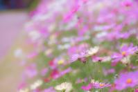 Jardin botanique - Une fleur