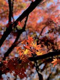 寒霞渓の紅葉 - やわらかな風の吹く場所に:母乳育児を応援