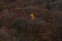 西沢渓谷の落葉①2018 - 光画日記